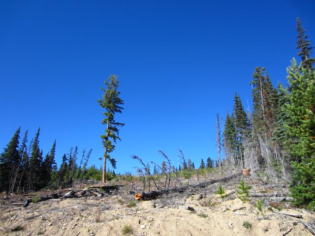 Logging-4
