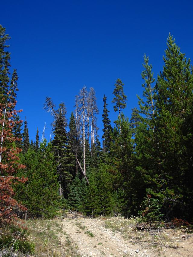 Logging-5