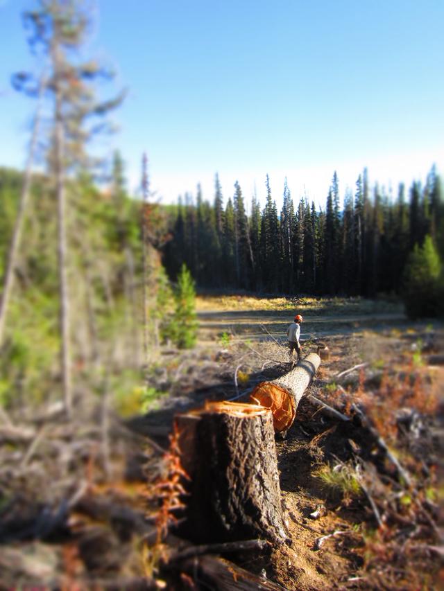 Logging-7