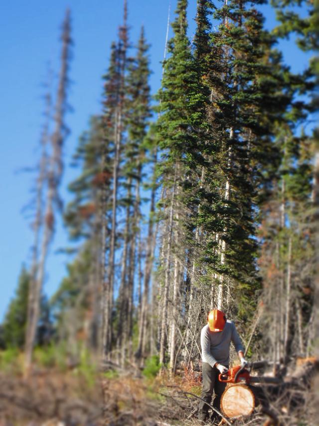 Logging 8