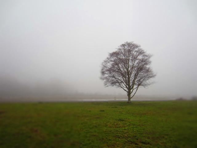 Finn-Slough-Foggy-Morning