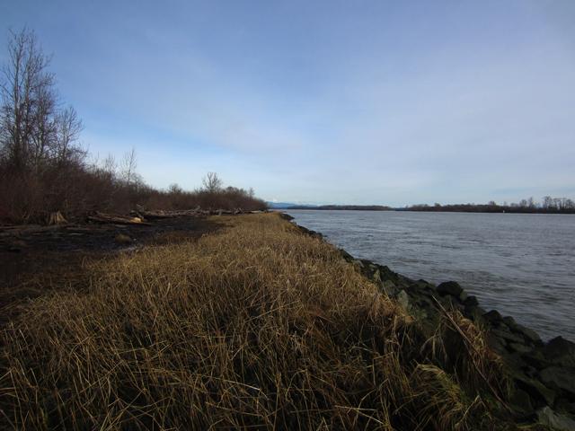 Finn-Slough-Fraser-River